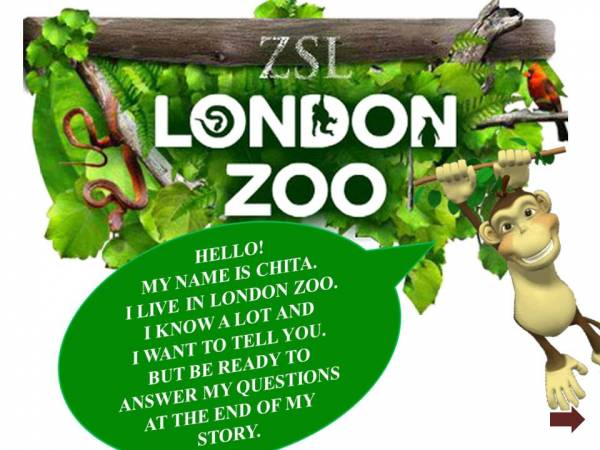 "Презентация ""Wonderful world of London Zoo""; 5-6 класс"